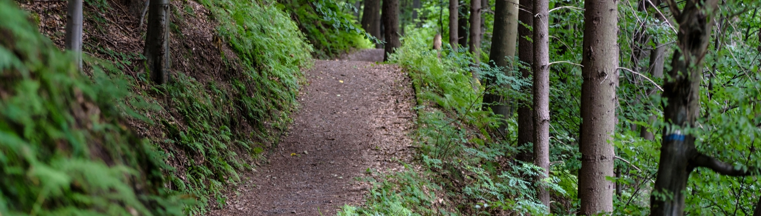 Trails banner with trees and path