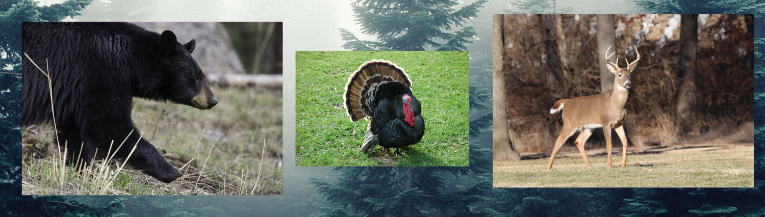 wildlife banner image with deer, bear and turkey